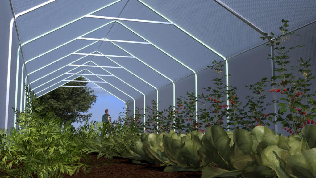 grønnsaksdrivhus