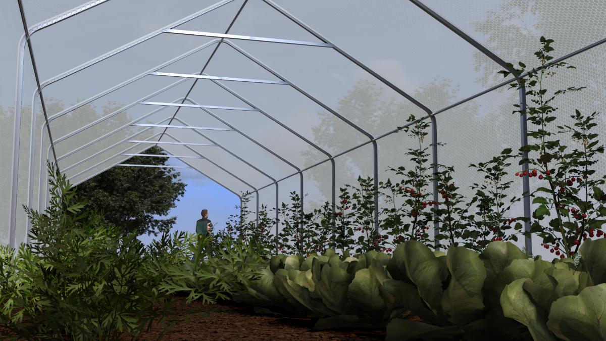 tunnel dyrking grønnsaker drivhus